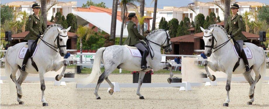 Dressurpferd auf einem Turnier